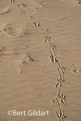 DesertTracks-4