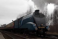 4464 'BITTERN' (Cumberland Patriot) Tags: blue mountain london garter ranger pacific north engine railway loco steam locomotive a4 eastern steamer 19 bittern lner cumbrian gresley 60019 4464