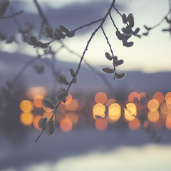 Spring bokeh (- David Olsson -) Tags: mars macro nature square march spring nikon branch sweden bokeh outdoor 11 karlstad bluehour fx tamron 90mm 90 squarecrop d800 vr vrmland 2014 mariebergsviken orrholmen bokehdots davidolsson