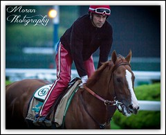 California Chrome (EASY GOER) Tags: horses horse ny sports racetrack race canon track competition racing 7d athletes sporting thoroughbred equine thoroughbreds