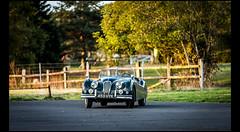 Jaguar XK 140 (Laurent DUCHENE) Tags: journéesdautomne lesecuyers 2016 jaguar xk 140