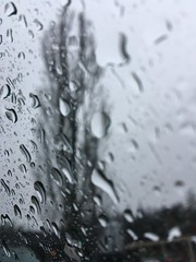 72/365: Welcome to My World (jchants) Tags: 365the2017edition 3652017 day72365 13mar17 project365 rain weather outthecarwindow