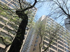 looking up at the Algonquin apartments, Kenwood (sassnasty) Tags: chicago walking tour neighborhood hood kenwood hoods