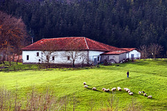 shepherd, sheep, and a farmhouse (Mikel Martnez de Osaba) Tags: house mountain man building green nature field grass animals rural landscape person countryside sheep shepherd farm farming flock meadow farmland pasture agriculture pastoral livestock herd herding herdsman