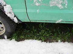 dandlelions hiding under the jeep. (green rumble) Tags: winter white snow green weather montana jeep s dandelions jeepcherokee greenjeep