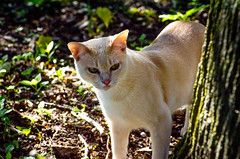 On the Prowl-10 (c.stewy) Tags: