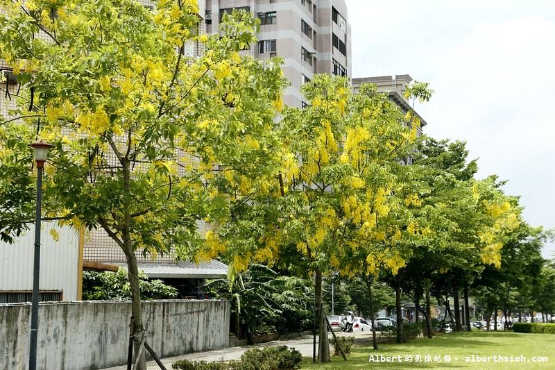 【阿勃勒】桃園市.陽明公園