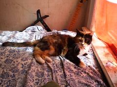 Autumn (universalcatfanatic) Tags: blue autumn red orange cats white black green window cat neck bed bedroom sill guitar room flag tortoiseshell blanket calico sheet tortie sil lay laying