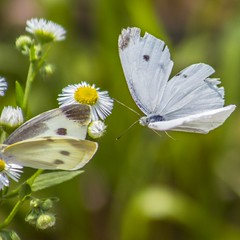 Butterflies (Johnnie Shene Photography(Thanks, 1Million+ Views)) Tags: flowers flower butterfly insect fly flying wings aviation flight wing butterflies insects flies flick