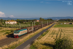 1006 - 652_080 + CARRI CHIUSI A CECINA (LIVORNO) 7-06-2013 (TRENO FROSINONE - NOVARA) FULL HD (Frank Andiver TRAIN IN TUSCANY) Tags: italy train canon frank photo italia photos rail trains tuscany rails locomotive toscana treno tigre fs trenitalia treni ferrovie binario 652 e652 fullhd andiver frankandiver trainintuscany