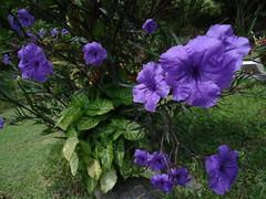 Las Flores II