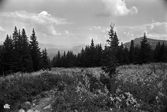 (solar_is) Tags: mountains film nature monochrome analog russia f80 nikkor nikonf80  nocolor fomapan urals fomafix