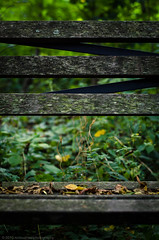 parkbench (Ron Bushaw) Tags: park bench kentucky louisville cherokee olmstead