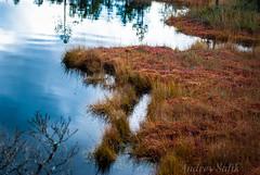 DSC_0890 (andrey.salikov) Tags: morning autumn fall landscape latvia september 1855 openair 2013