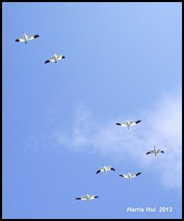 Do You See Where They Are Going? - Terra Nova S5276e