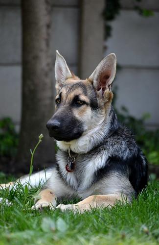Pet Dog Training Tips