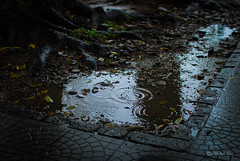 November rain (Quoc Bao Truong) Tags: nikon vietnam viet hue nam nikonian