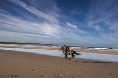 SMV Doonbeg Christmas-1.jpg (seanmurray0) Tags: ireland clare westcoast horseriding irl coclare doonbeg doonbegresort doughmorebeach doonbeglodge