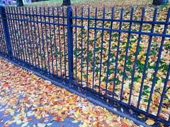 20131107_093522 (ShutterSparks) Tags: autumn fall colors leaves wv westvirginia clarksburg