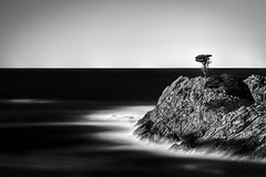 Pacific Cypress (StefanB) Tags: ocean california longexposure bw seascape tree water monochrome coast pacific outdoor horizon cypress geotag pointlobos 2013 em5 flvonmirikr