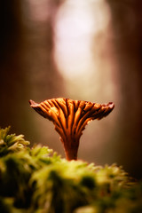 There's too much crying in the sound (keithj5000) Tags: light mushroom forest woodland moss woods glow bokeh fungi fungus