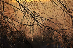 golden hour of winter ... (Eggii) Tags: winter light dice tree time walk wintertime goldenhour lodz lodzstoki eggii