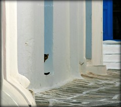 Peek-a-boo (thingamijig) Tags: street blue cat feline chat peekaboo greece gatto mykonos whitewashedwalls canon400d blinkagain