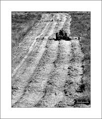 E' tempo di fieno - It's time of hay (Jambo Jambo) Tags: italy tractor italia harvest eu tuscany farmer hay swallow toscana maremma trattore fieno rondine contadino mietitura nikond5000 jambojambo maremmacountryside