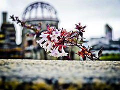 domelight2 (disorderimages) Tags: flowers bokeh hiroshima dome atomic