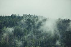 (Trompeat) Tags: wood cloud green nature fog clouds forest landscape austria tirol nubes niebla kirchberg