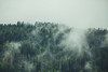 (Trompeat) Tags: wood cloud green nature fog clouds forest landscape austria tirol nubes niebla kirchberg