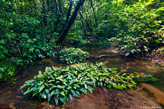 Tropical Rainforest Stream (Irene Becker) Tags: africa nature creek landscape rainforest stream westafrica nigeria crossriver blackafrica crossriverstate nigerianimages nigerianphotos imagesofnigeria akampa nationalparkcrossriverstate