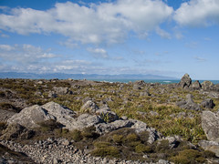 239 - Paysage  rocheu de Turakirae