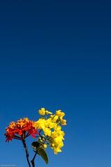 af1507_0056-2 (Adriana Fchter) Tags: santa flowers floripa sea people costa flores sol praia azul brasil canon mar pessoa ar flor paisagem cu da catarina homem livre ilha pes magia joaquina ce meulugarpreferido gettyimagesbrasil adrianafchter albeneirmarques