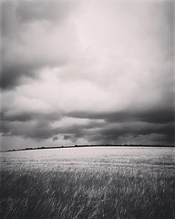 Derbyshire Field, 8 August 2016 (Greta Powell) Tags: instagramapp square squareformat iphoneography uploaded:by=instagram derbyshire corn fiels fields stormy cloudy sky light dark bnw blackanwhite blackandwhite samsung mobilephone instagram countryside midlans rural clouds landscape