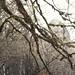 05 Babin Zub and lichen