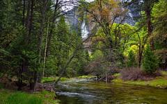 Yosemite Creek (Yosemite National Park) (thor_mark ) Tags: capturenx2edited colorefexpro creek day3 falls lookingnorth nature nikond800e project365 trees triptopasoroblesandyosemite upperyosemitefall waterfalls yosemitecreek yosemitefalls yosemitenationalpark yosemitevalley ca unitedstates absolutelystunningscapes