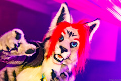 _MG_0683 (Tiger_Icecold) Tags: confuzzled cfz2016 cf2016 furcon furry convention fursuit birmingham party deaddog ddp deaddogparty