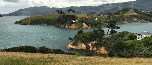 Quarantine Island - looking  across Otago Harbour from the Portobello Peninsula