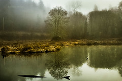Late Winter Green (jeanmarie's photography) Tags: jeanmarieshelton jeanmarie landscape light lake green fog mist morning serene trees water waterscape washington wastate nikon nature nikond810 adobe lightroom
