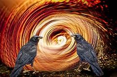 Guardians Of The Abyss (Wes Iversen) Tags: brighton hss kensingtonmetropark michigan milford sliderssunday tamron150600mm birds crows swirls wildlife composites