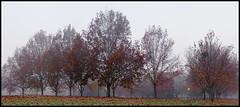Foggy_Tree_05 (Beetwo77) Tags: autumn trees panorama lake tree fall leaves fog liverpool fuji pano kitlens australia nsw 1855mm westernsydney westernsuburbs autopano chippingnorton xpro1 fujixpro1