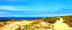 pelicans at asilomar (Sunnyvaledave) Tags: digital oil asilomarstatebeach pacificgrovecalif