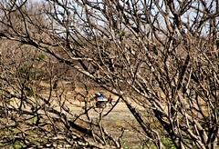 Sede (Tarcisinho) Tags: people tree nature water animal gua landscape pessoas natureza paisagem burro cear jumento seca rvore galhos carroa nordeste serto caatinga quixeramobim canonsx110