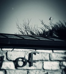 moonbirdstone (Laura Sorrells) Tags: november moon bird sign stone wall kentucky retreat trappist 2012 gethsemani