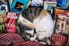 Feline Bibliophile
