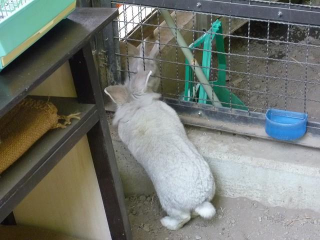 何を見てるのかな?|須坂市動物園