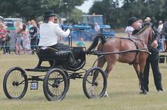 Driving & Hackney Classes (messy_beast) Tags: horses hackney cart showcart