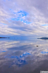 Lake View (smellerbee) Tags: newzealand sky lake reflection water clouds mirror duck warm nz northisland taupo reflectin
