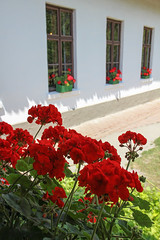 Opusztaszer  National Historical Memorial Park 14 - flowers in the window (Romeodesign) Tags: park old flowers windows red heritage history memorial hungary bauer geranium skansen peasant muskátli geranie opusztaszer 550d nationalhistoricalmemorialpark ópusztaszer
